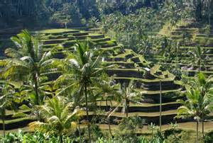 Ubud_Bali